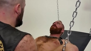 Bald superchub drilling red bear